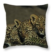 Two Sleepy Four-month-old Leopard Cubs Throw Pillow