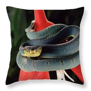 Two-striped Forest Pit Viper Bothrops Throw Pillow