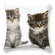 Two Tabby Kittens Throw Pillow