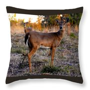 Two White Tails Throw Pillow
