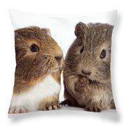 Two Young Guinea Pigs Throw Pillow