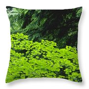 Umbrella Of Trees In Forest Throw Pillow