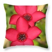 Unanimous Photography Throw Pillow