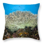 Underside Of A Table Coral, Papua New Throw Pillow by Steve Jones