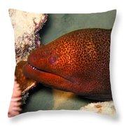 Undulated Moray Eel  Throw Pillow