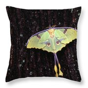 Unique Butterfly Resting On Tree Bark Throw Pillow