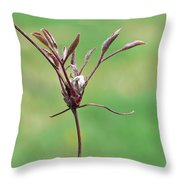 Unrealized Beauty Throw Pillow