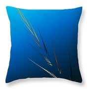 Untitled 2 082212 Throw Pillow