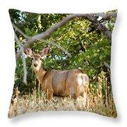 Utah Mule Deer Throw Pillow