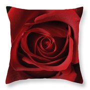 Valentine Rose - Color Throw Pillow