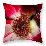 Variegated Rose Close Up 2011 Throw Pillow