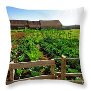 Vegetable Farm Throw Pillow by Carlos Caetano