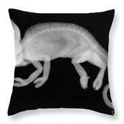 Veiled Chameleon X-ray Throw Pillow by Ted Kinsman