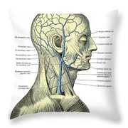 Veins Of The Head And Neck Throw Pillow