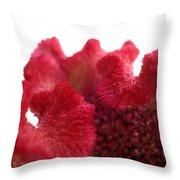 Velvet Bloom Throw Pillow