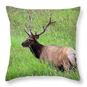 Velvet Bull Elk Throw Pillow