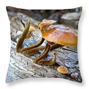 Velvet Foot Mushroom - Flammulina Velutipes Throw Pillow