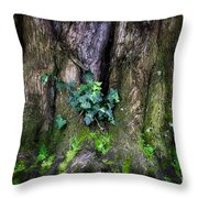 Velvet Ivy Throw Pillow