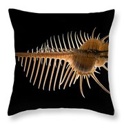 Venus Comb Murex Shell Throw Pillow