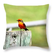 Vermilion Flycatcher Throw Pillow