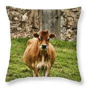 Vernon County Cow Throw Pillow