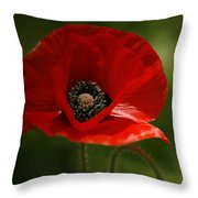 Vibrant Red Oriental Poppy Wildflower Throw Pillow