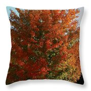Vibrant Sugar Maple Throw Pillow