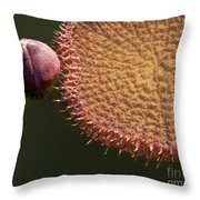 Victoria Amazonica Budding Throw Pillow