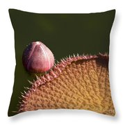 Victoria Amazonica Bud And Leaf Throw Pillow