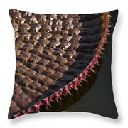 Victoria Amazonica Leaf Vertical Throw Pillow
