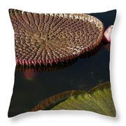 Victoria Amazonica Leaves Throw Pillow