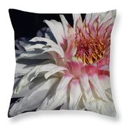 Victoria Water Lily Throw Pillow