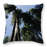 View Looking Up The Trunks Of Giant Throw Pillow