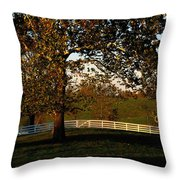 View Of A Large Sycamore Tree And White Throw Pillow