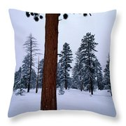View Of A Ponderosa Pine Surrounded Throw Pillow