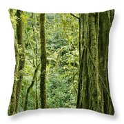 View Within A Rain Forest Throw Pillow