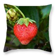 Vine Ripened Strawberry Throw Pillow