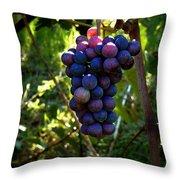 Vineyard 31 Throw Pillow