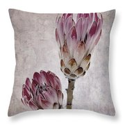 Vintage Proteas Throw Pillow