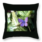 Violet Butterfly Throw Pillow