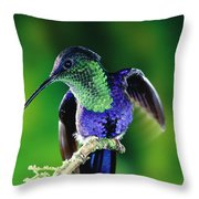 Violet-crowned Woodnymph Thalurania Throw Pillow