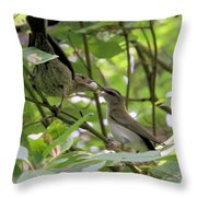 Vireo And Cowbird Throw Pillow