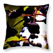 Virginia Creeper Fruit Throw Pillow