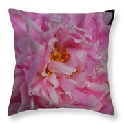 Virginia Tech Peace Garden 4 Throw Pillow