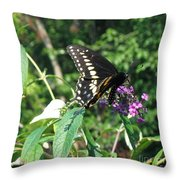 Visit From A Black Swallowtail Throw Pillow