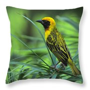 Vitelline Masked Weaver Throw Pillow