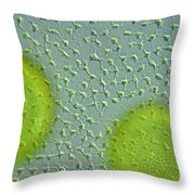 Volvox Globator Surface View Of Colony Throw Pillow