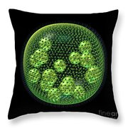 Volvox Throw Pillow by Russell Kightley
