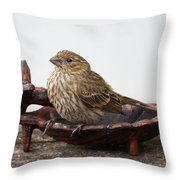 Waiting For Food Throw Pillow