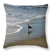Waiting For Lunch On Shore Throw Pillow